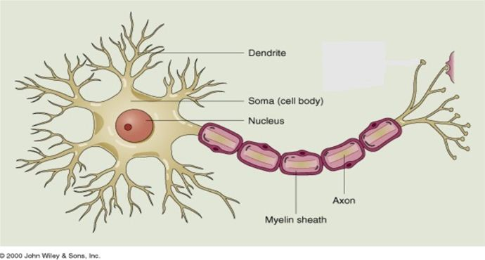 What's in a nerve?