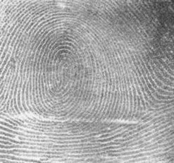 Fingerprint_Whorl (c) NIST Database