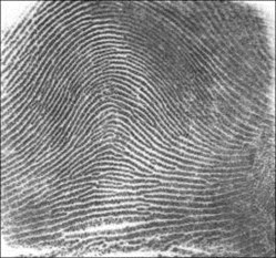 Fingerprint_Arch (c) NIST database