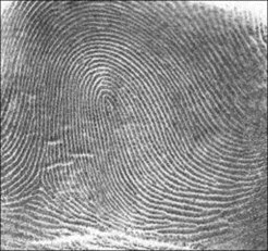 Fingerprint_Loop (c) NIST database