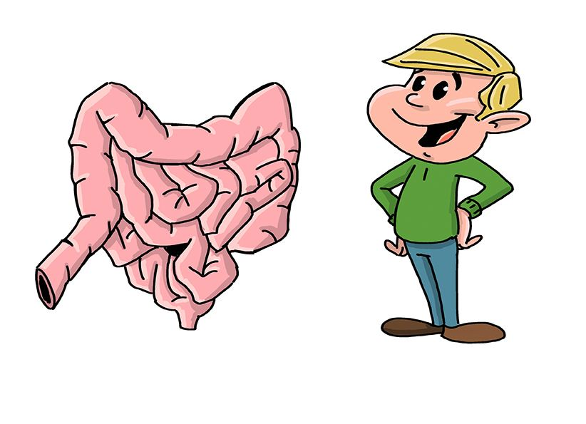 how long are your intestines?, Human Body