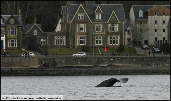 Sperm whale goes sightseeing in Scotland