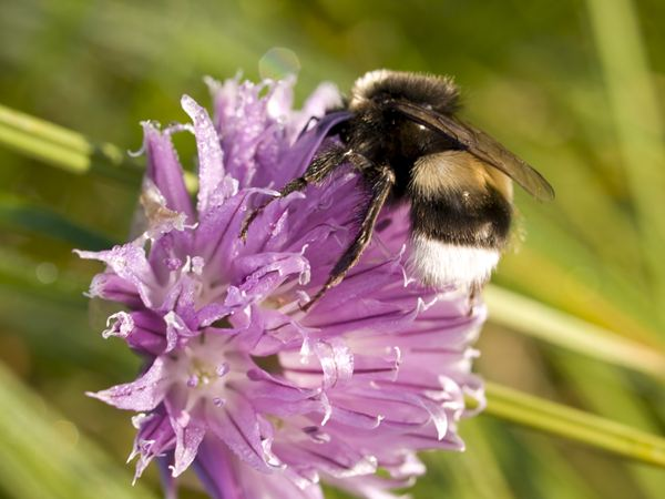 School children announce bumblebee breakthrough