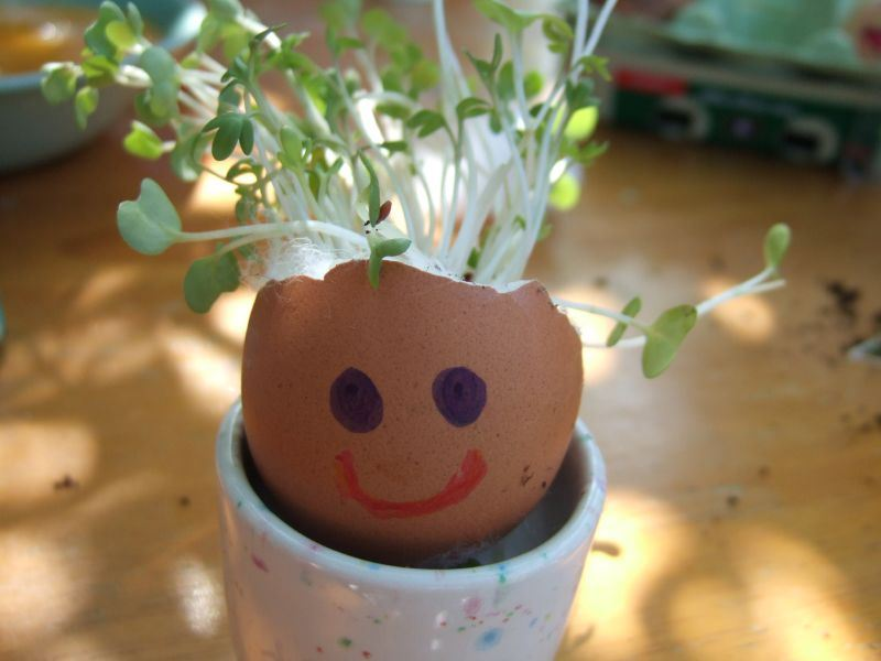 Grow a cress head!