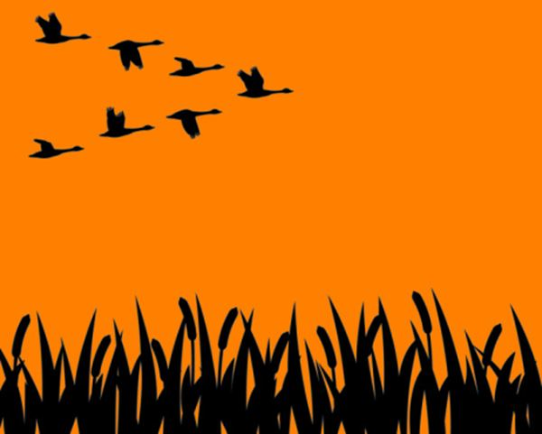 Why don't migrating birds get lost?