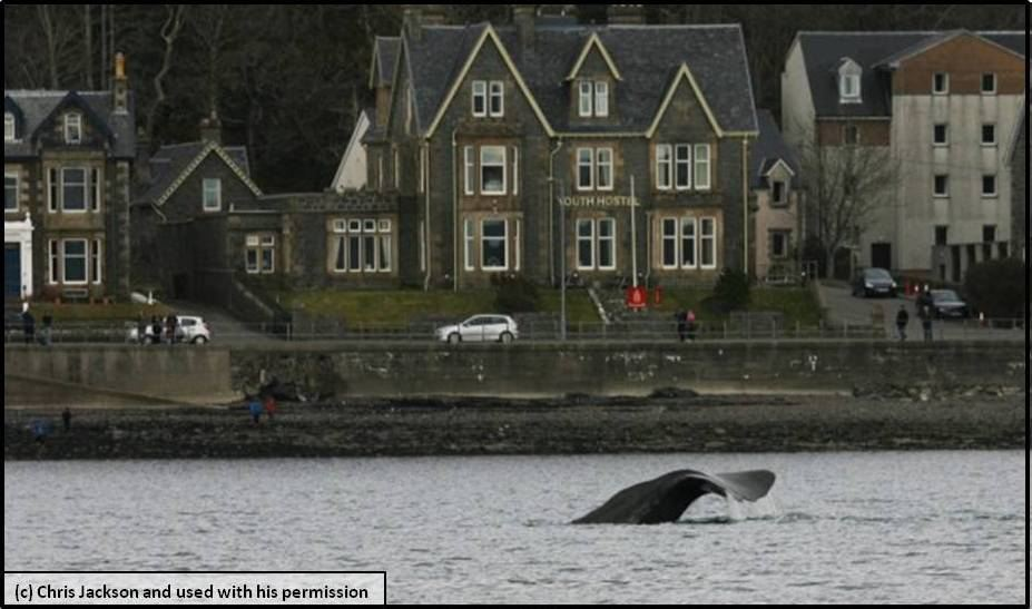 Whales on holiday? Scottish town Oban gets an unexpected visitor...
