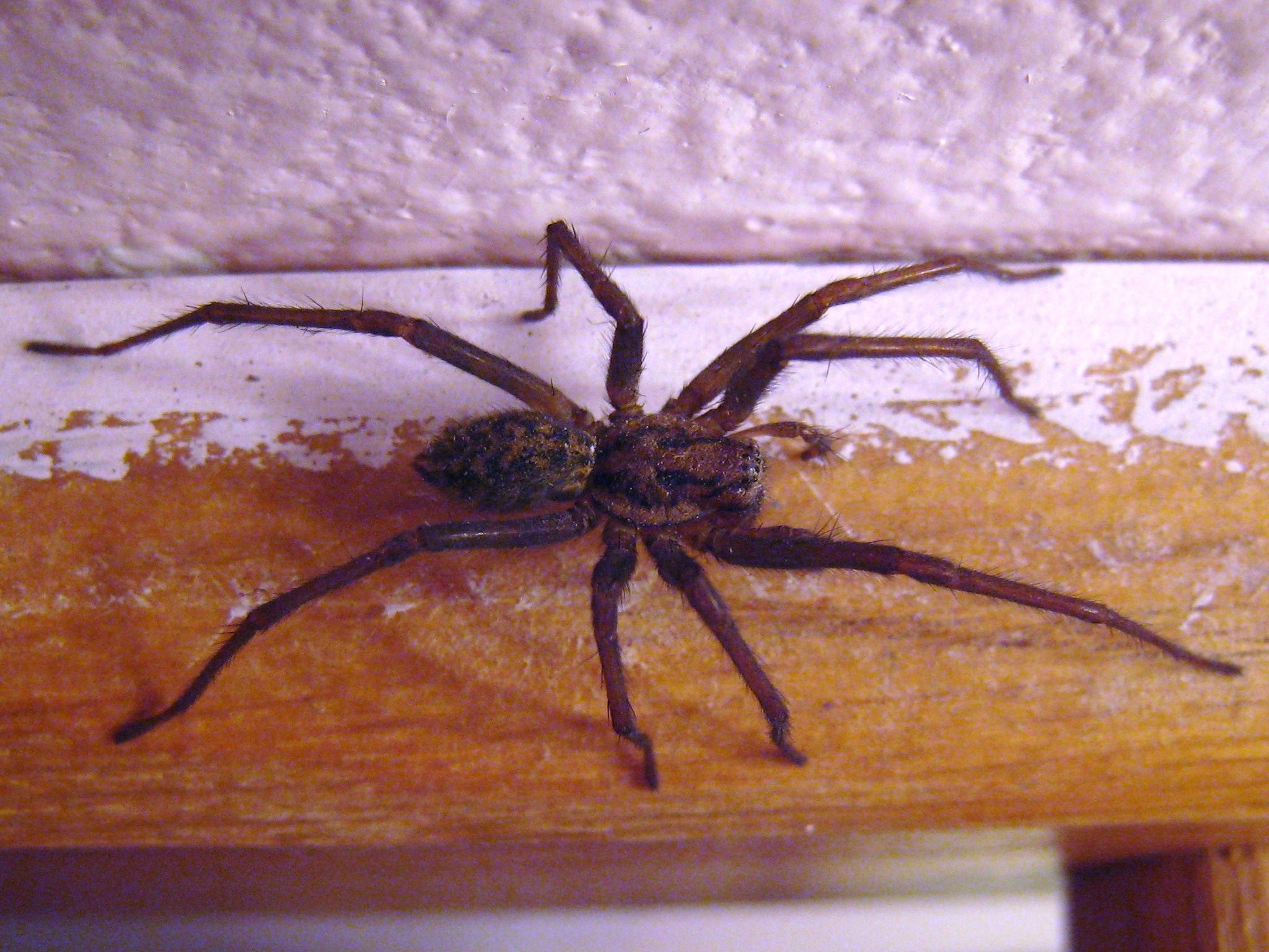 What do you know about… spiders?